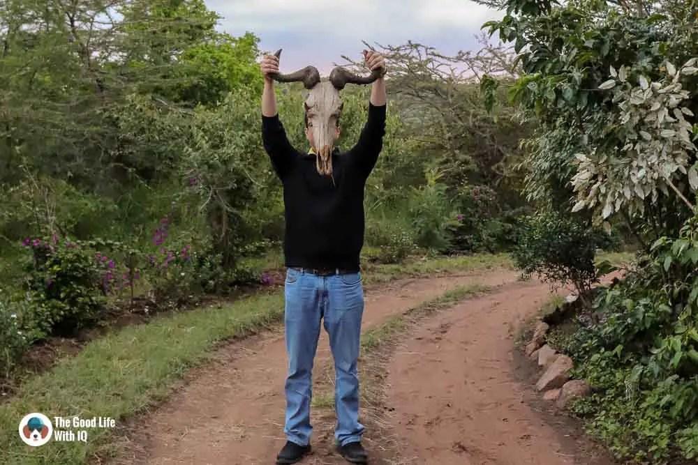 Kenya safari - Masai Mara - Wildebeest skull