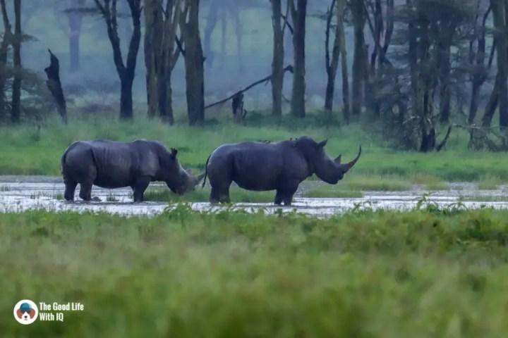 Kenya safari - Nakuru - Rhinos