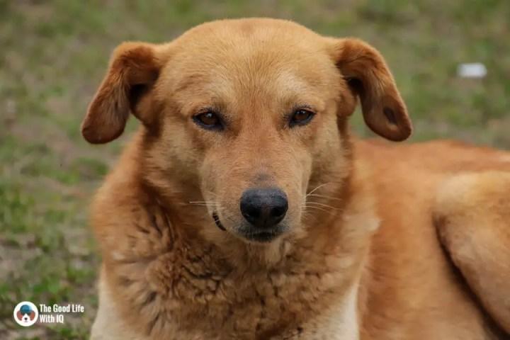 Doggie close up