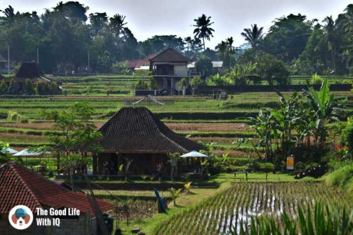 Rice fields, Campuhan ridge - Three days in Ubud, Bali
