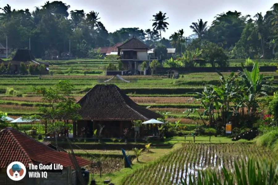 Rice fields, Campuhan ridge - Three days in Ubud, Bali