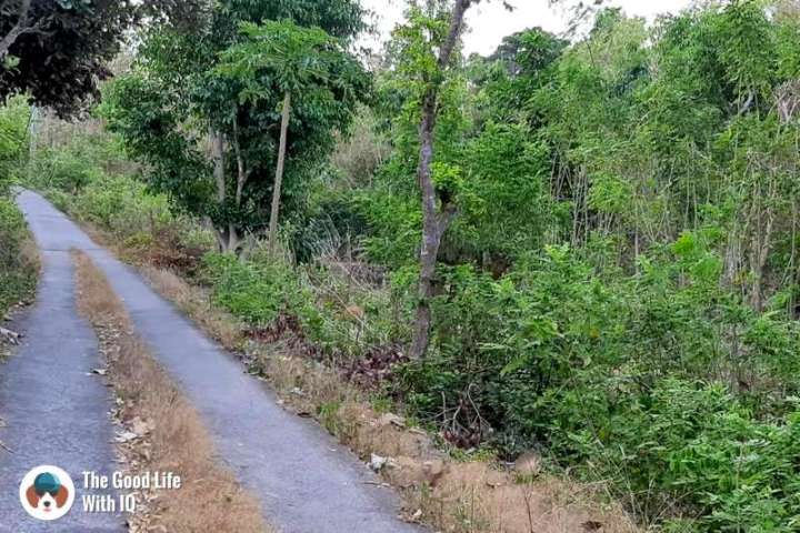 Forest road, Nusa Ceningan - Best places to stay in Bali