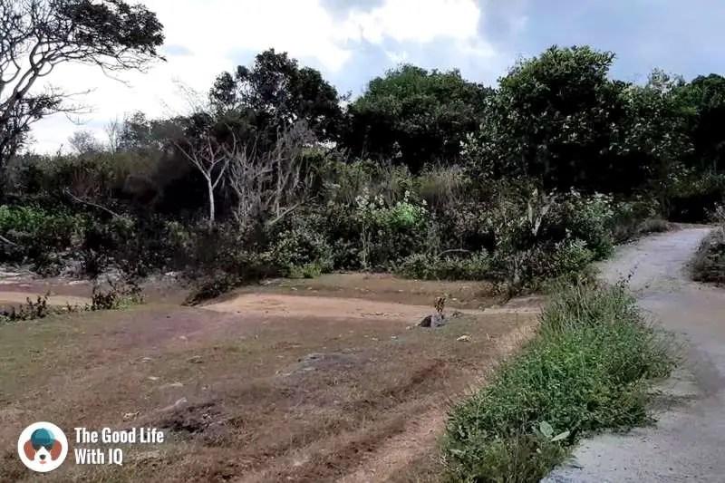 Forest road, Nusa Ceningan