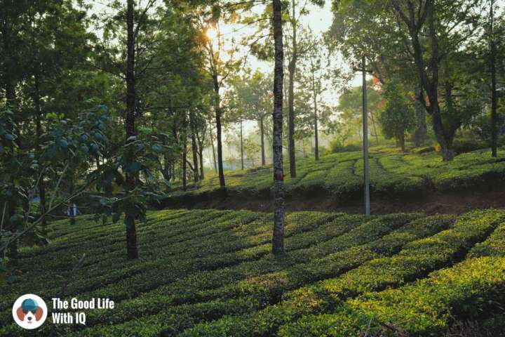 Six reasons why Valparai should be your winter holiday destination this year