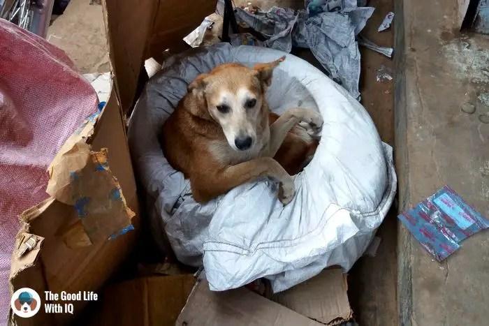 Doggie in Ooty