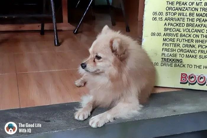 Doggie, Ubud, Bali