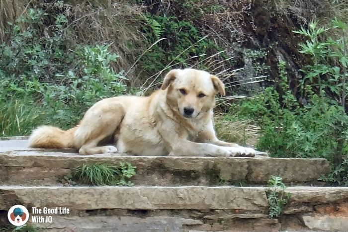 Tiger's Nest (Taktsang) - Cute doggies we've met on our travels