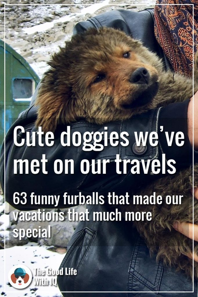 Pinterest thumbnail - Cute doggies we've met