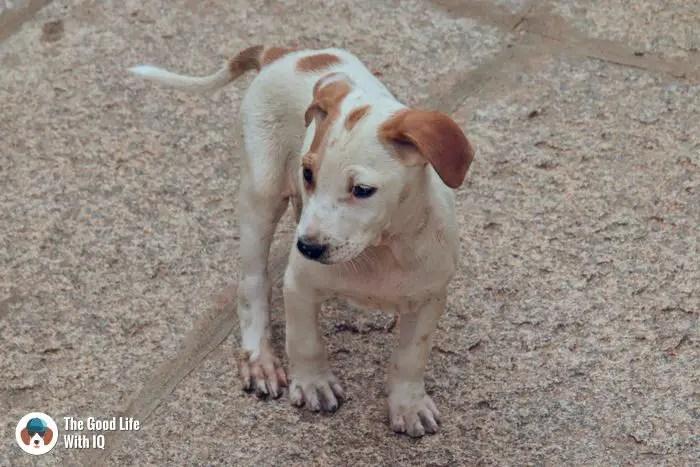 Lepakshi - Cute doggies we've met on our travels