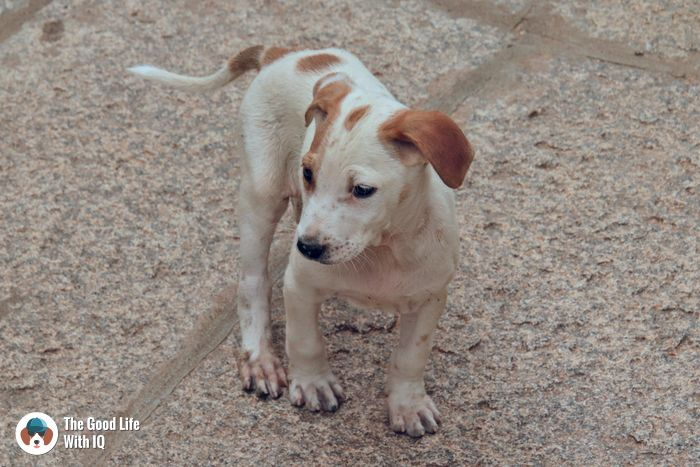 Lepakshi - Cute doggies we've met on our travels