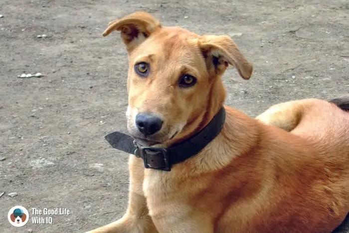 Doggie in Lonar