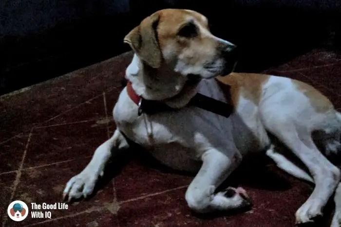 Goa - Cute doggies we've met on our travels
