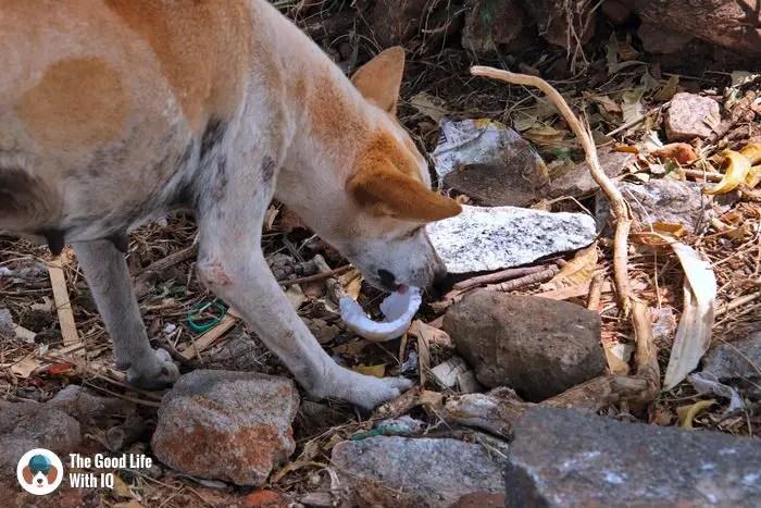 mahabalipuram - Cute doggies we've met on our travels