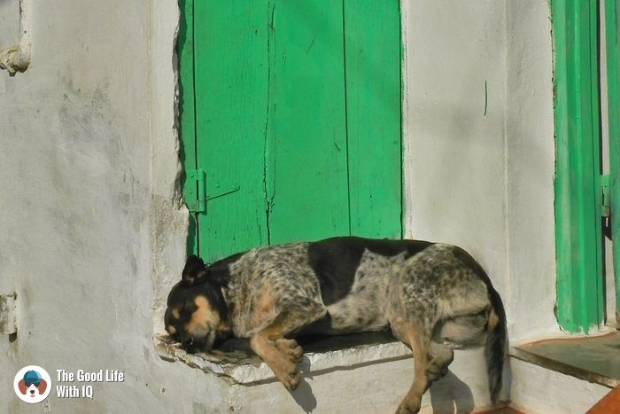 Doggie in Udaipur