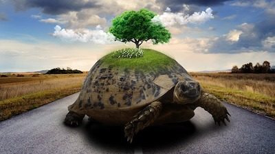 Tortoise representing world