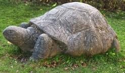 Lucky Tortoise statuette