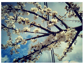 Blossom like a blossom