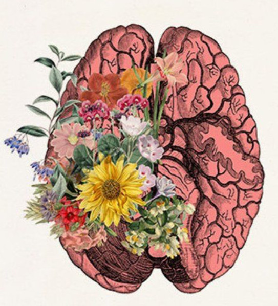 The floral brain