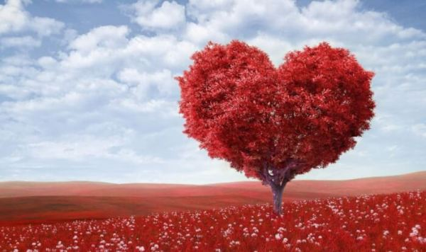 Contoh Puisi Cinta Bertepuk Sebelah Tangan