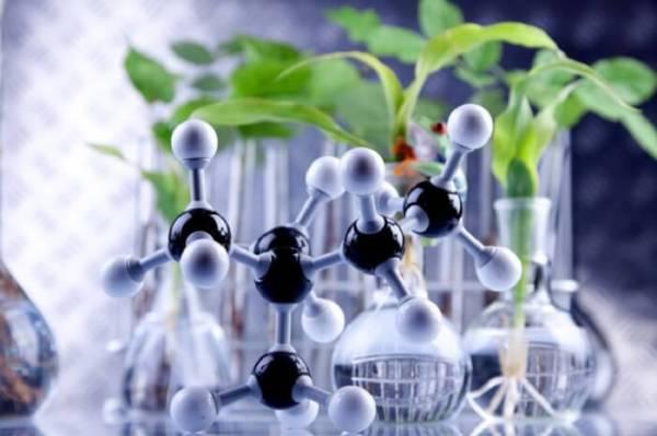 Bioteknologi Modern Dan Contohnya