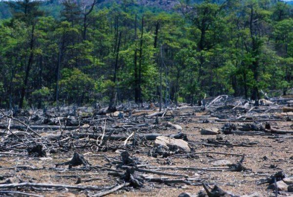 Dampak Polusi Tanah