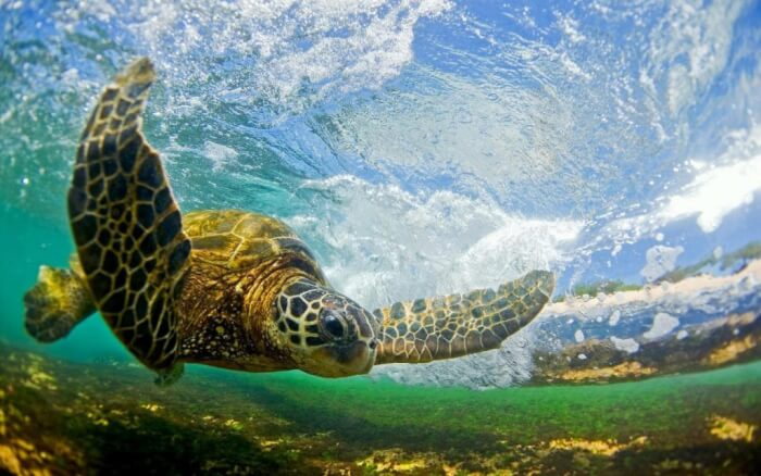 Macam Macam Ekosistem Pengertian Komponen Dan Contohnya