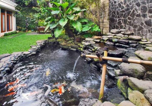 Rantai Makanan di Kolam