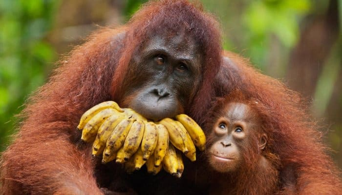 Fauna di wilayah Barat Indonesia