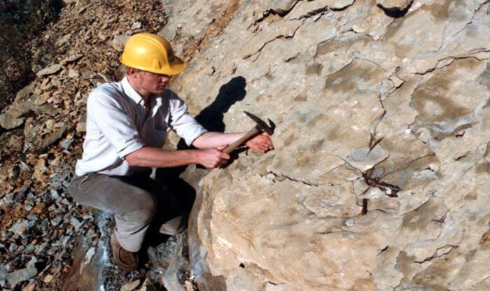 Contoh Daftar Riwayat Hidup Geologi