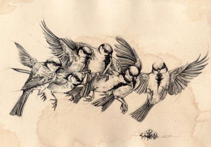 Gambar Ilustrasi Burung