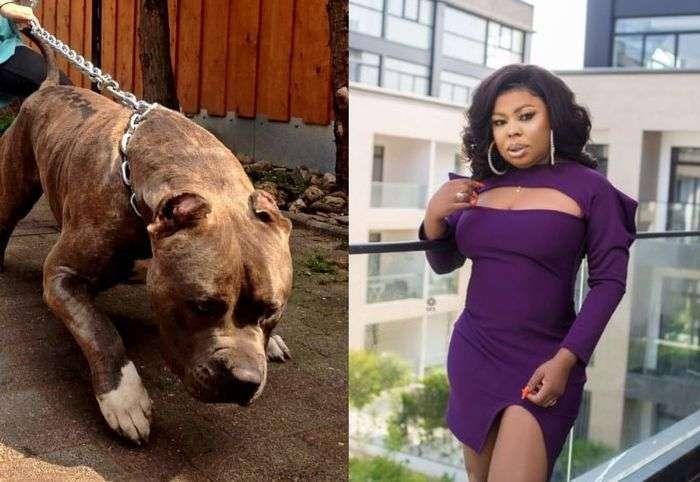 VIDEO: Nana Tonardo Gives An Eyewitness Account Of How Afia Schwar Slept With A Pitbull Dog In Kumasi For $5,000