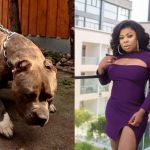 VIDEO: Nana Tonardo Gives An Eyewitness Account Of How Afia Schwar Slept With A Pitbull Dog In Kumasi For $5,000