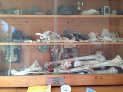Old bones. The caving hut we stayed in had a collection of old Moa bones and amazing historical artefacts. See the maps later!