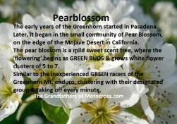 1965 a11 Greenhorn Pearblossom flower