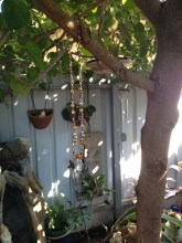 The prism is and wind-chime were both Mum's, The Stag-horn in the background I grew from a pup, then gave to Mum. It hung in her garden for years.