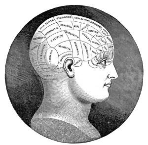 4 Vintage Phrenology Head Diagrams  The Graphics Fairy