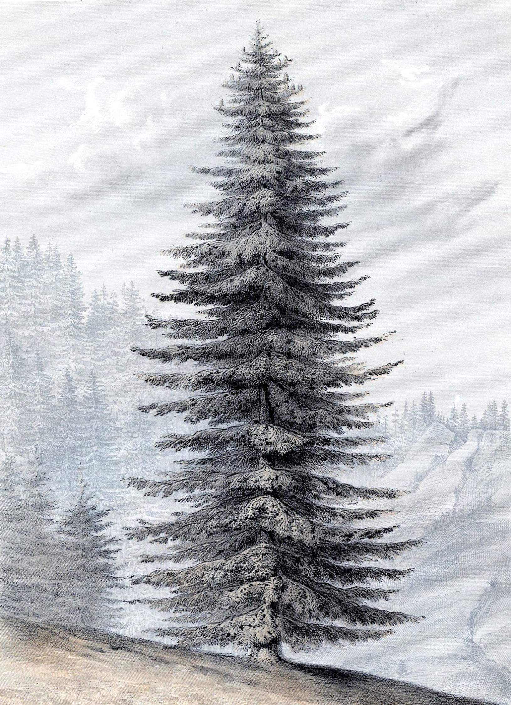 3 Christmas Tree Printable Art Glorious Giant Botanical