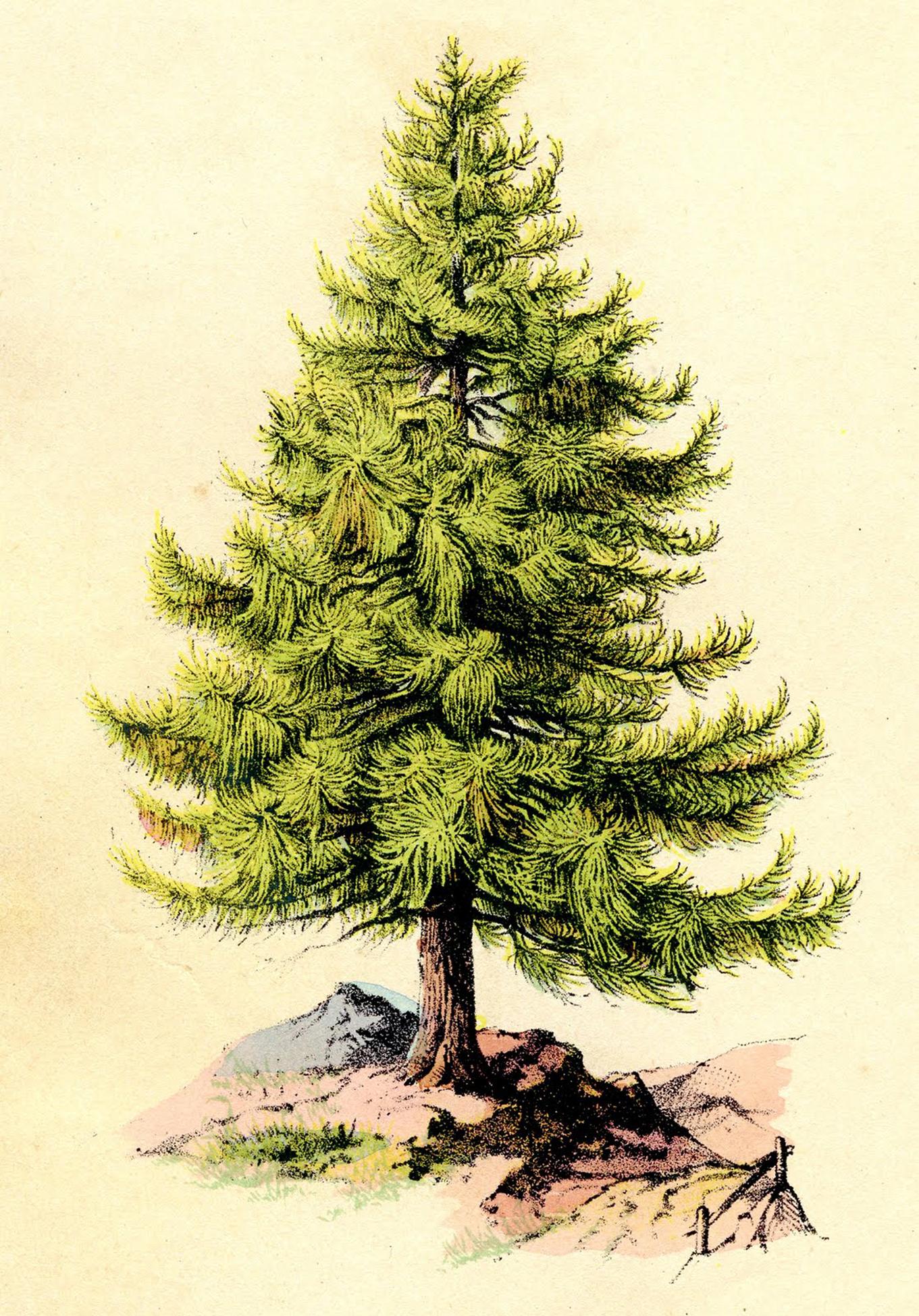 3 Christmas Tree Printable Art