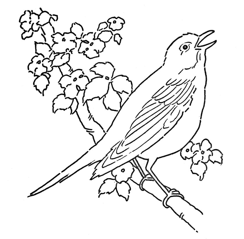 line art  coloring page  bird  blossoms  the