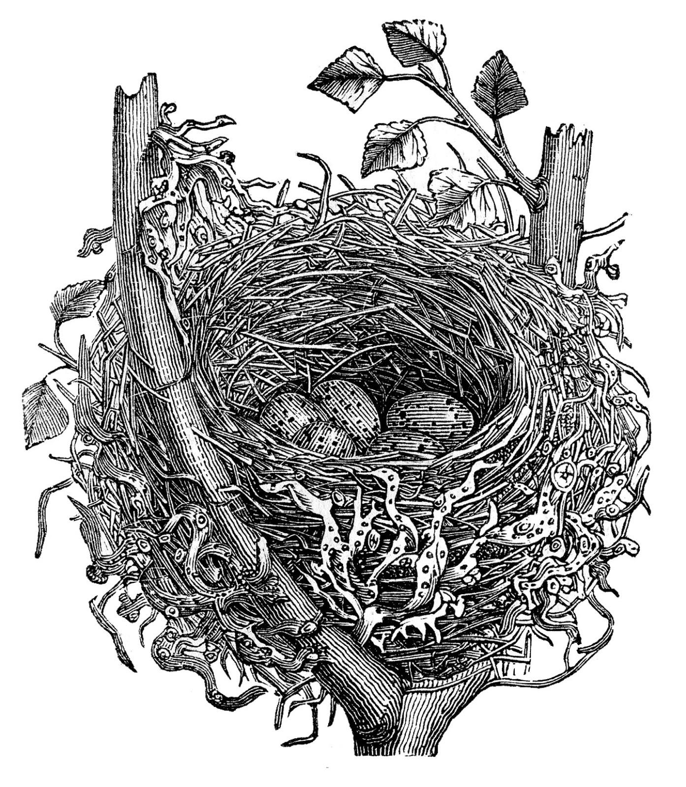Nest Stock