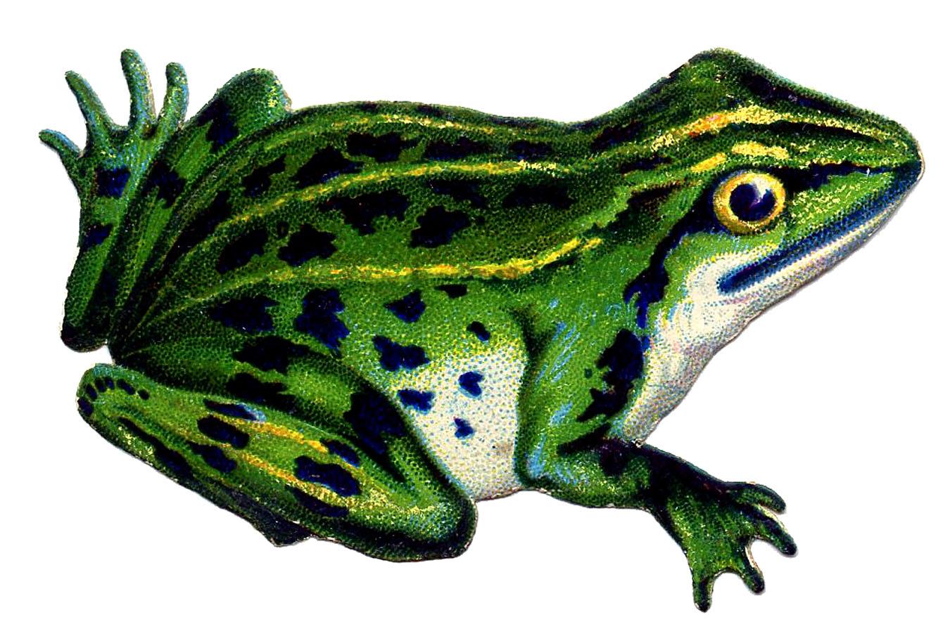 Vintage Frog Image Graphicsfairy3