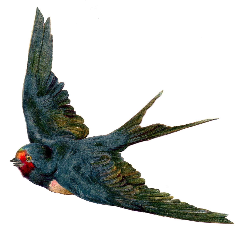 Vintage swallow illustration