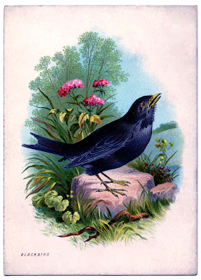 Instant Art Printable Beautiful Blackbird The Graphics