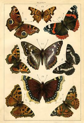 Instant Art Printable Antique Butterflies And Moths