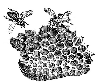 Vintage Clip Art Bees with Honeycomb The Graphics Fairy