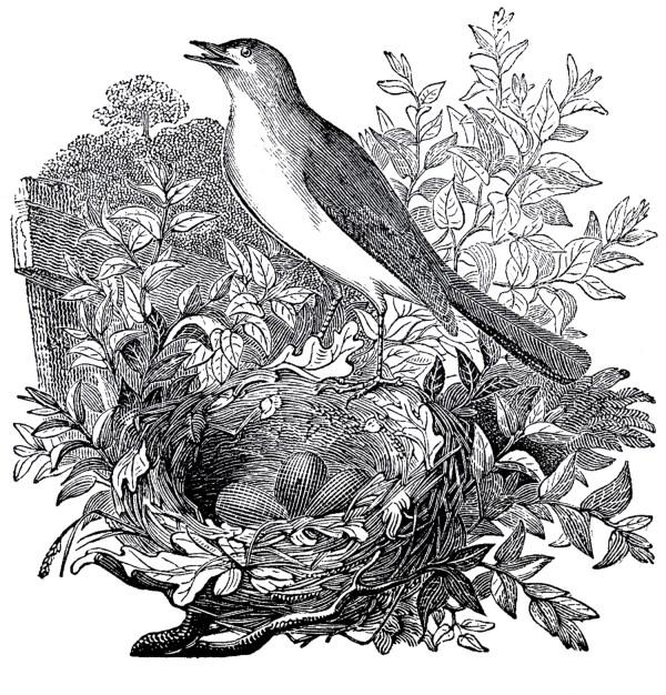 Free Vintage Nightingale Images
