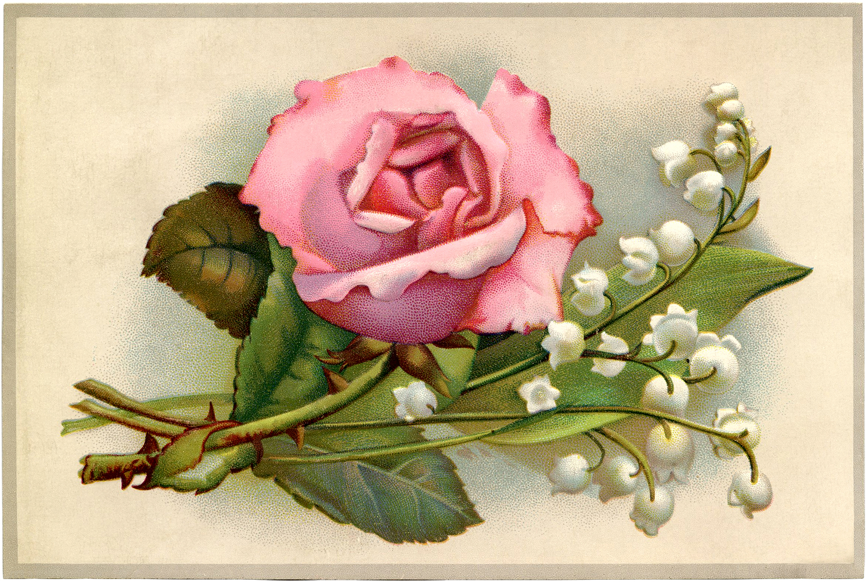 Vintage Roses And Lily Of The Valley Image The Graphics