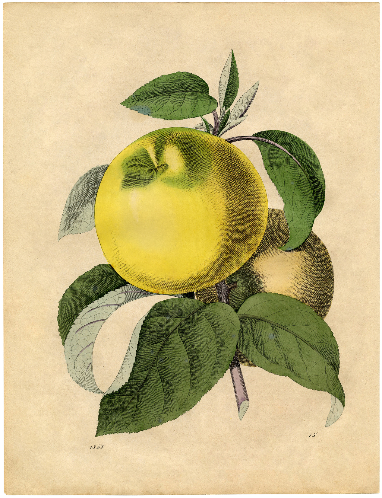 Free Botanical Art Prints
