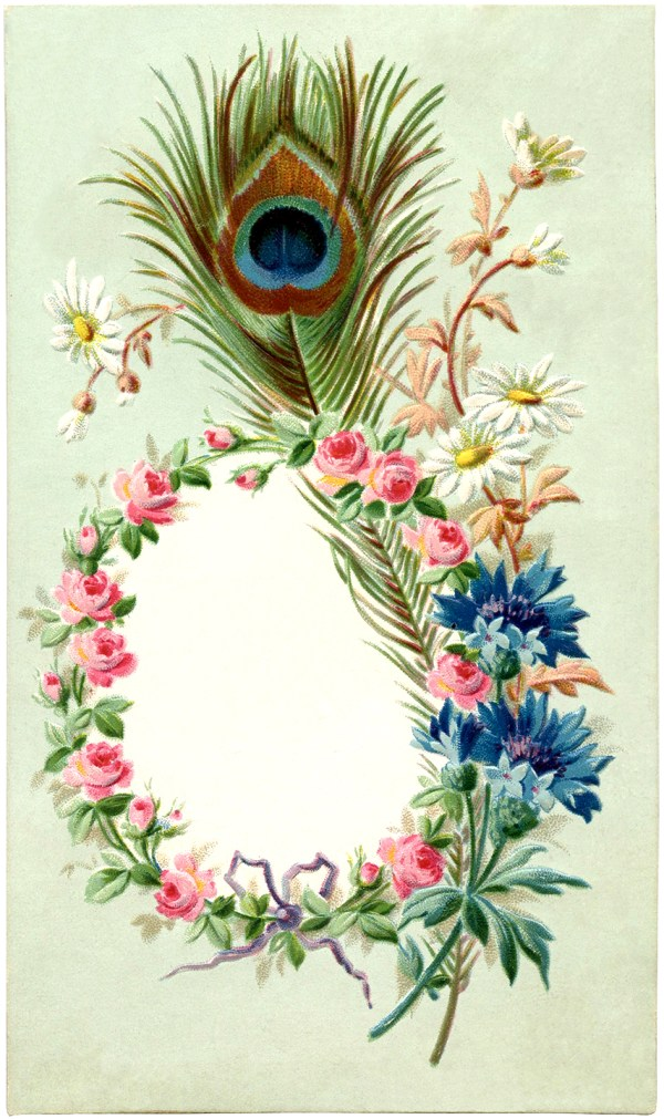 Vintage Peacock Feather Frame Image - The Graphics Fairy