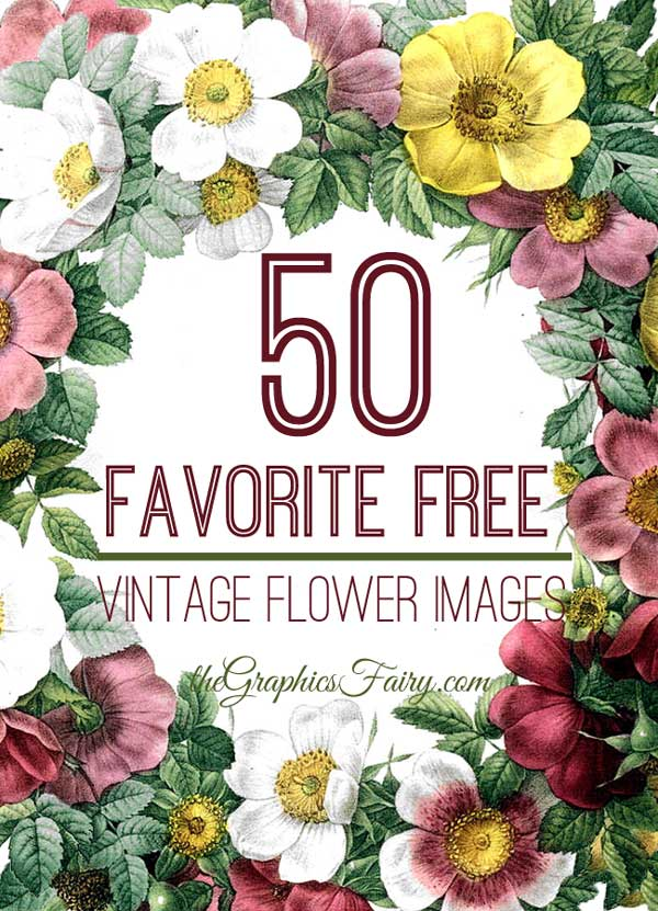 50 Favorite Free Vintage Flower Images The Graphics Fairy